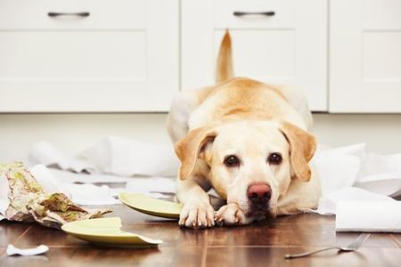 Mit csinálj, ha magatartászavaros a kutyád?