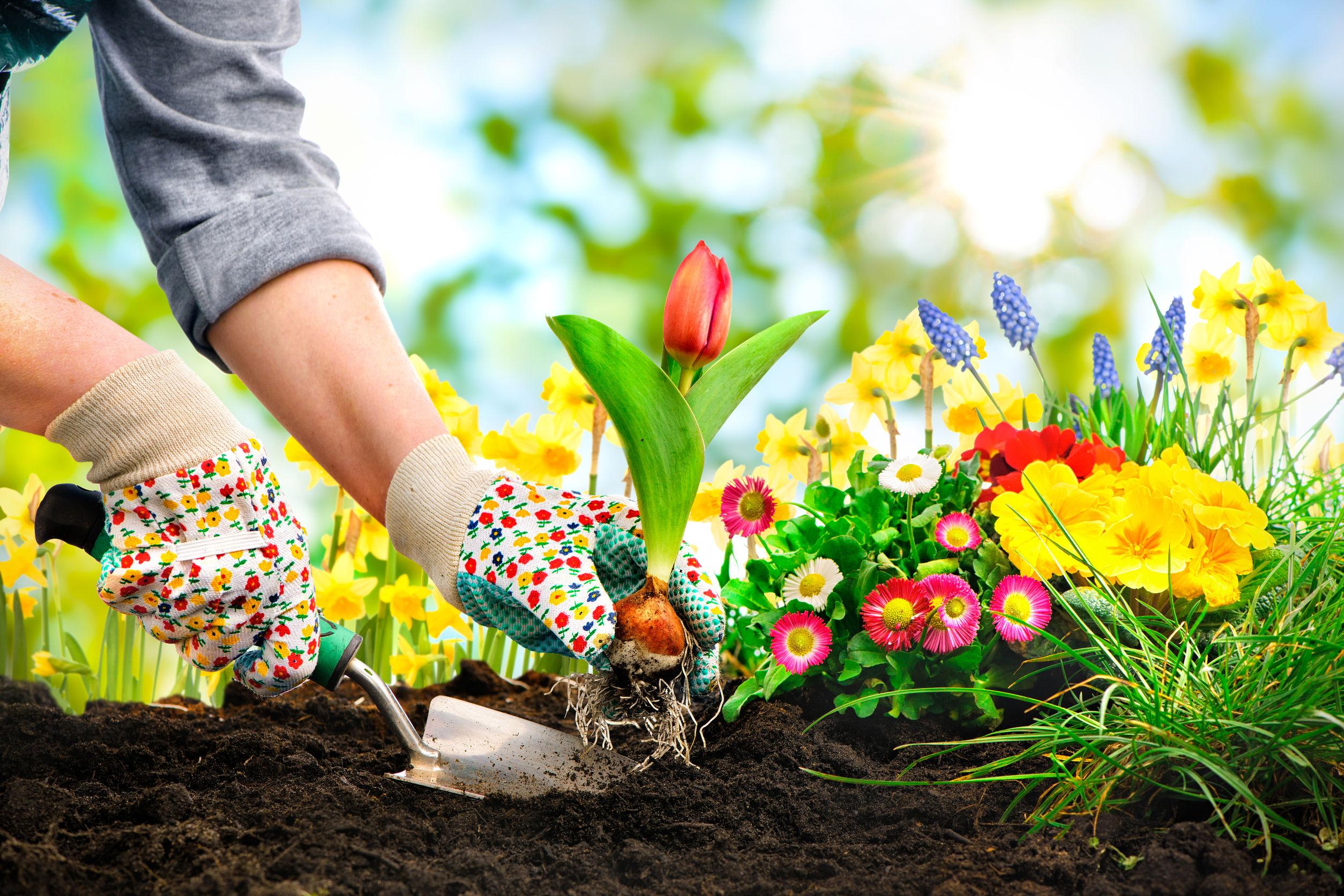 Növénygyógyítás homeopátiával